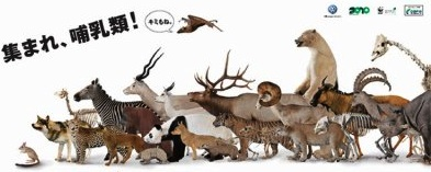 animal-2010.jpg